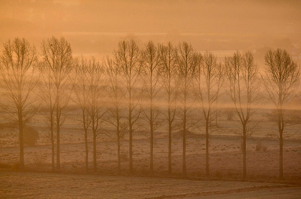Matt Cardy「Late Autumn Sun Rises Over The Somerset Levels」:写真・画像(17)[壁紙.com]
