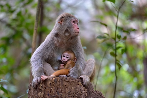 Animal Arm「alert female monkey」:スマホ壁紙(13)