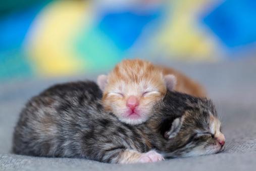 子猫「Germany, Newborn kittens sleeping on blanket, close up」:スマホ壁紙(17)