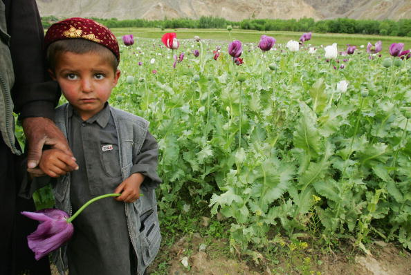 Holding Hands「Poppy Growth Rate in Badakhshan Region is Down」:写真・画像(6)[壁紙.com]