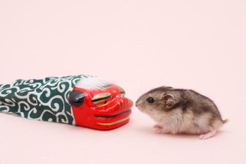 Dragon「Dzhungarian hamster (Phodopus sungorus) next to toy dragon, studio shot」:スマホ壁紙(3)