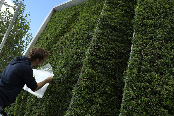 Environmental Conservation「Green City Solutions Uses Moss To Filter City Air」:写真・画像(16)[壁紙.com]
