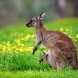 Kangaroo壁紙の画像(壁紙.com)