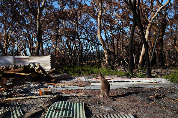 Kangaroo Island「Kangaroo Island Begins Recovery Process Following Devastating Bushfire Season」:写真・画像(17)[壁紙.com]