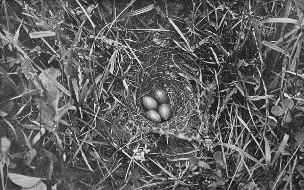 Full Frame「Nest Of Skylark」:写真・画像(12)[壁紙.com]