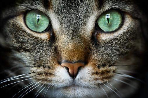 Extreme Close-Up「Feline」:スマホ壁紙(10)