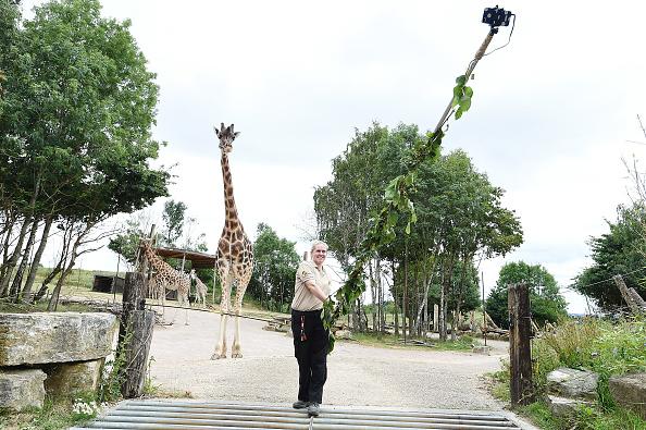 Giraffe「Chessington Giraffe Go Wild For Neck-stra Long Selfie Stick」:写真・画像(18)[壁紙.com]