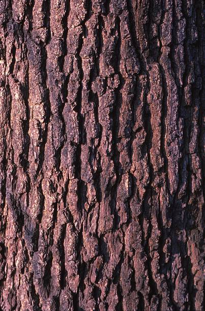 Oak Tree Bark:ニュース(壁紙.com)
