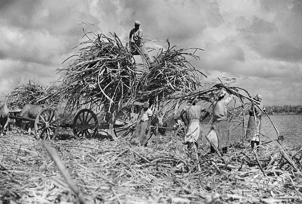 Sugar Cane「Sugar Cane」:写真・画像(8)[壁紙.com]