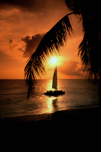 Frond「Silhouettes of palm tree fronds and sailboat at sunset in the Caribbean」:スマホ壁紙(0)