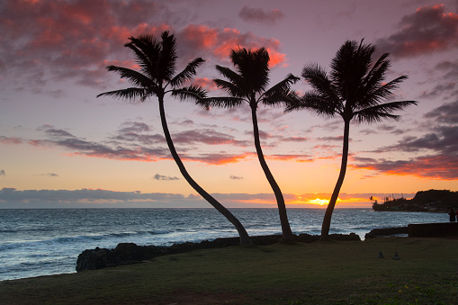 ヤシ「Silhouettes of palm trees on beach at Kaaawa, Oahu, Hawaii, USA」:スマホ壁紙(18)