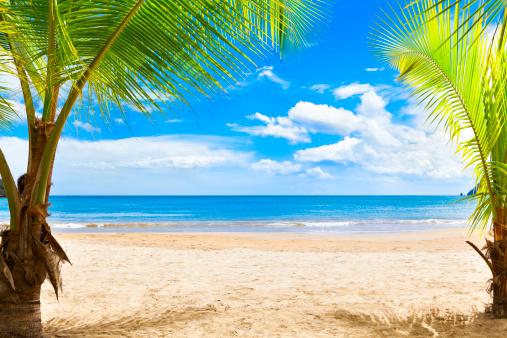 ココヤシの木「静かな熱帯の島は、カリブ海のビーチでヤシの木」:スマホ壁紙(8)