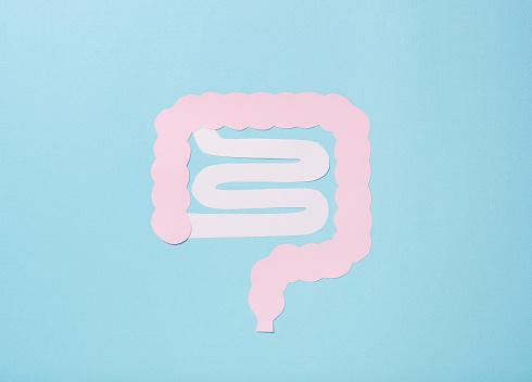 Human Abdomen「Large intestine and small intestine」:スマホ壁紙(5)