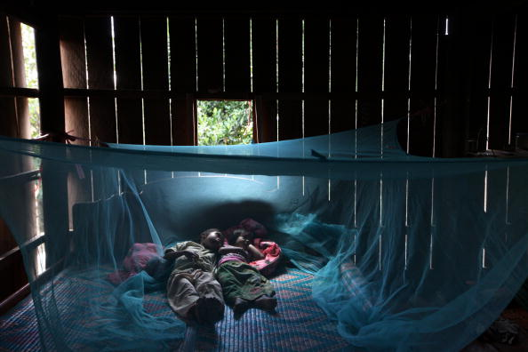 Netting「WHO Makes Progress Battling Drug Resistant Malaria In Cambodia」:写真・画像(0)[壁紙.com]