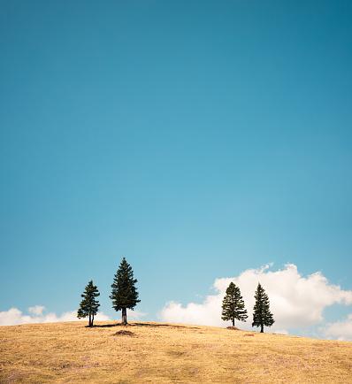 最上部「松の木と草原」:スマホ壁紙(5)