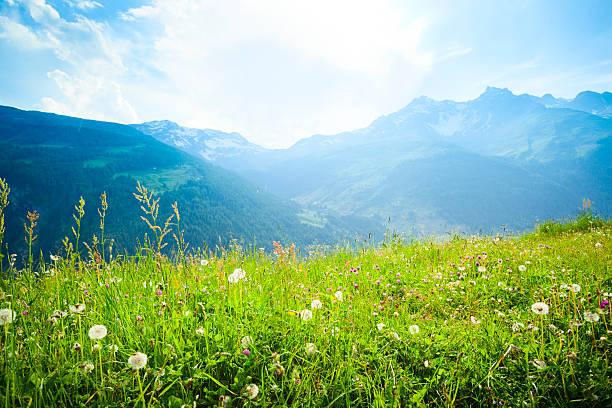 Alpine meadow:スマホ壁紙(壁紙.com)