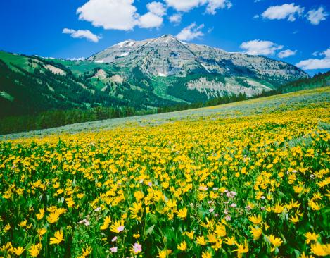 花畑「アルパイン Meadow でワイオミング」:スマホ壁紙(8)