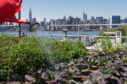 Gardening「Urban rooftop farming in Brooklyn, New York」:スマホ壁紙(12)