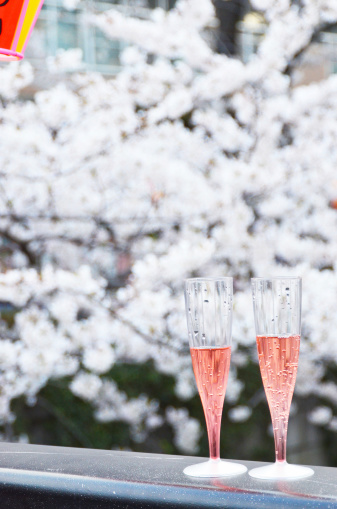 Cherry Blossom「花見」:スマホ壁紙(9)