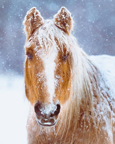 Horse Portrait In Winter Snow Storm:スマホ壁紙(壁紙.com)
