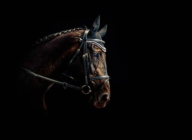 Horse Portrait:スマホ壁紙(壁紙.com)