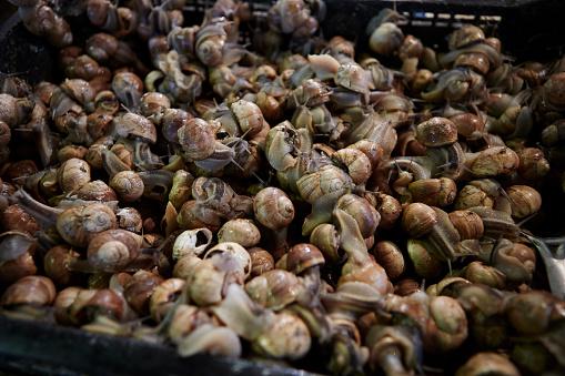 カタツムリ「Fresh edible snails in traditional market」:スマホ壁紙(1)