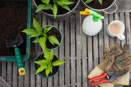 Fertilizer「Garden potting table overhead with space for copy.」:スマホ壁紙(9)