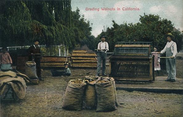 Sack「Grading Walnuts In California」:写真・画像(13)[壁紙.com]