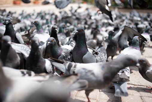 Flock Of Birds「Dove」:スマホ壁紙(2)