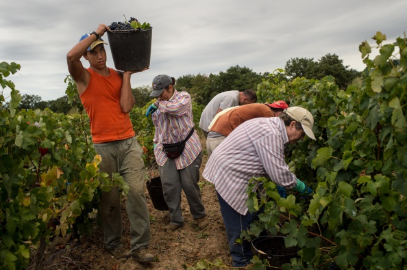 Languedoc-Rousillon「Spanish Emigrants Travel To Perpignan For French Wine Harvest」:写真・画像(9)[壁紙.com]