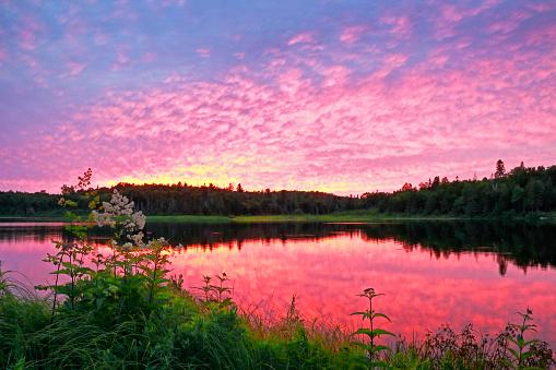 ピンク色「夕暮れ時のテン川州立公園」:スマホ壁紙(16)