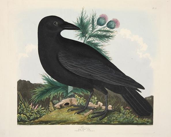 Engraved Image「Raven」:写真・画像(2)[壁紙.com]