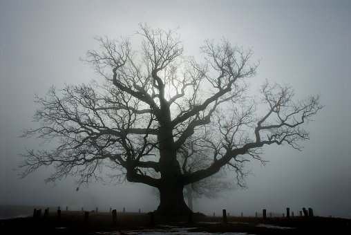 Unrecognizable Person「Old oak tree」:スマホ壁紙(14)