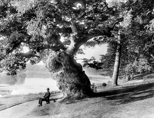 Great Lakes「Old Oak Tree On The Bank Of The Great Lake」:写真・画像(8)[壁紙.com]