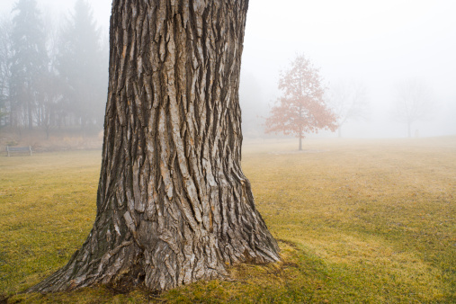 Focus On Foreground「Old Oak Tree Trunk in Autumn Fog at Park」:スマホ壁紙(19)