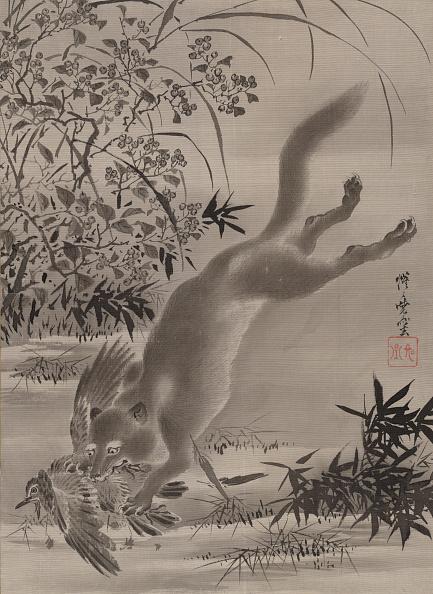 Animals Hunting「Fox Catching Bird」:写真・画像(4)[壁紙.com]