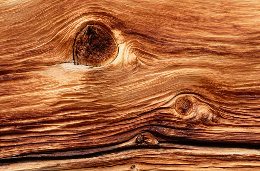 Inyo National Forest「Woodgrain Pattern of Bristlecone Pine」:スマホ壁紙(11)