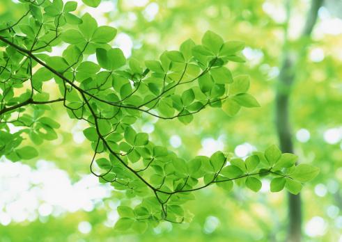 Nikko City「Leaf」:スマホ壁紙(16)