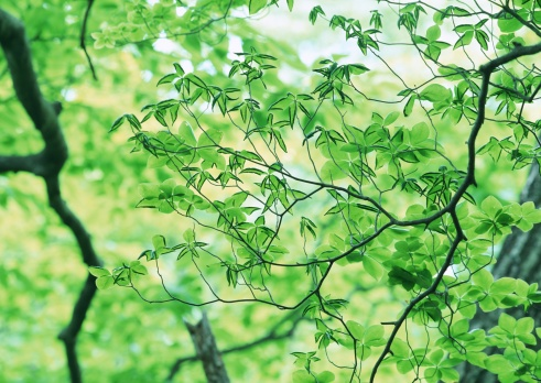 Nikko City「Leaf」:スマホ壁紙(5)