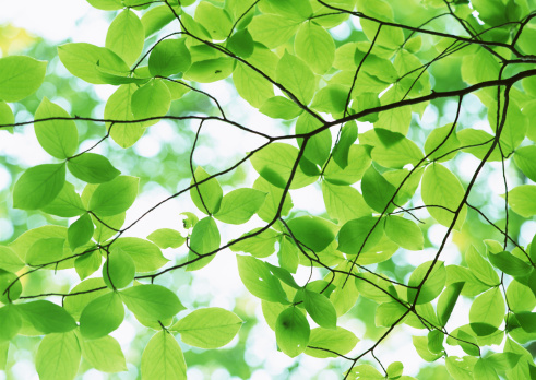 Nikko City「Leaf」:スマホ壁紙(18)