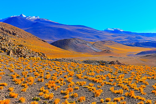 Bolivian Andes「Bolivian Andes altiplano at sunrise and volcano, Idyllic Atacama Desert, snowcapped Volcanic steppe puna landscape panorama – Potosi region, Bolivian Andes, Chile, Bolívia and Argentina border」:スマホ壁紙(7)