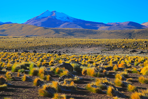 Puna「Bolivian Andes altiplano at sunrise and volcano, Idyllic Atacama Desert, snowcapped Volcanic steppe puna landscape panorama – Potosi region, Bolivian Andes, Chile, Bolívia and Argentina border」:スマホ壁紙(13)