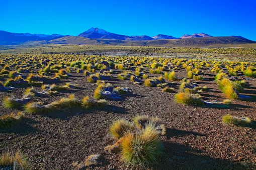 Bolivian Andes「Bolivian Andes altiplano at sunrise and volcano, Idyllic Atacama Desert, snowcapped Volcanic steppe puna landscape panorama – Potosi region, Bolivian Andes, Chile, Bolívia and Argentina border」:スマホ壁紙(9)