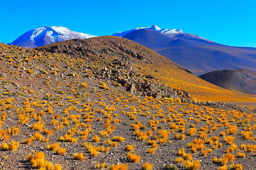 Bolivian Andes「Bolivian Andes altiplano at sunrise and volcano, Idyllic Atacama Desert, snowcapped Volcanic steppe puna landscape panorama – Potosi region, Bolivian Andes, Chile, Bolívia and Argentina border」:スマホ壁紙(13)