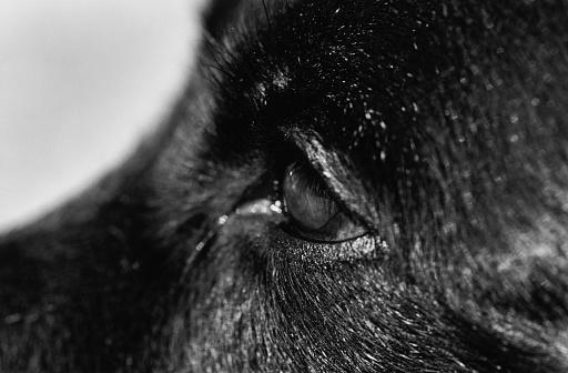 Eyesight「Dog's Eye」:スマホ壁紙(3)