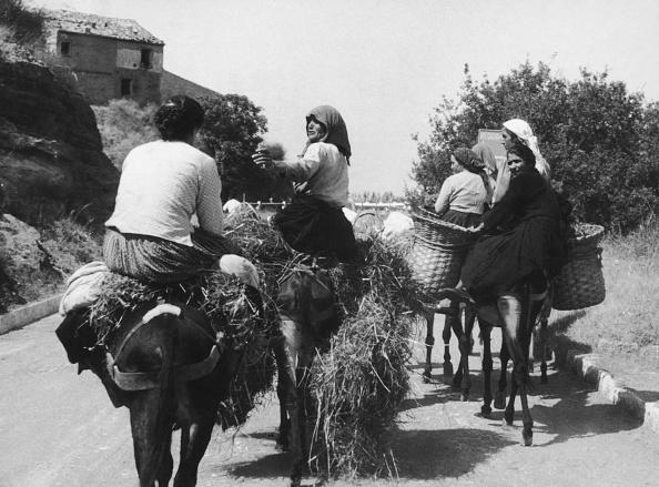 Working Animal「Italian Donkey」:写真・画像(17)[壁紙.com]