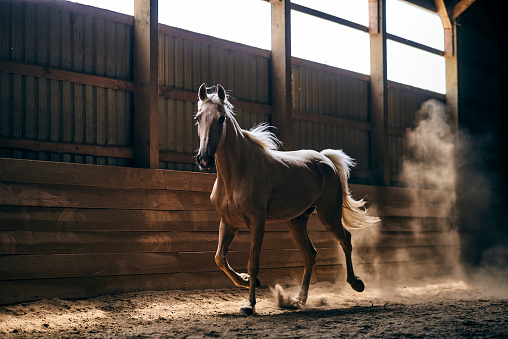 Horse「A Horse Backlit By The Sunight Galloping In A Stable」:スマホ壁紙(18)