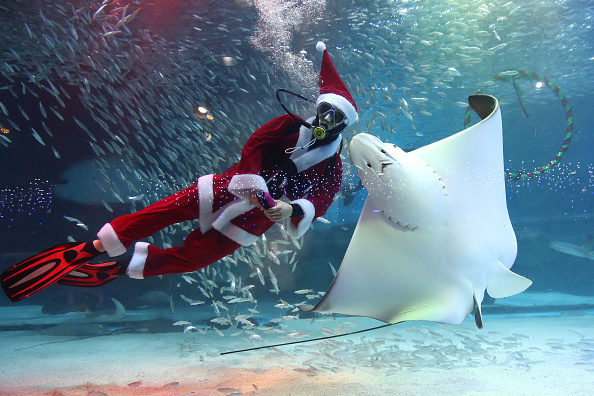 Christmas「Santa Claus Divers Swim With Fishes In Seoul」:写真・画像(12)[壁紙.com]