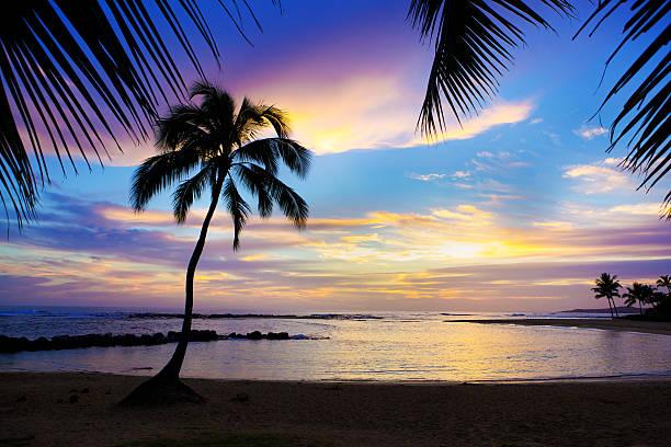 サンセットドパームトリーポイプビーチのハワイ州カウアイ島:スマホ壁紙(壁紙.com)