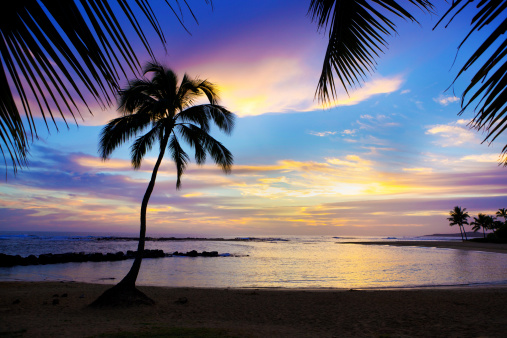 Hawaii Beach「Sunset Sihouette Palm Tree on Poipu Beach of Kauai Hawaii」:スマホ壁紙(9)